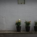 壁の花 2