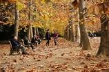 降り敷く秋の葉
