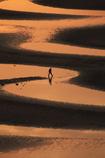 オレンジの砂紋を歩く人影