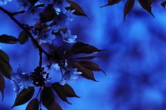 夜明けのブルーに染まる