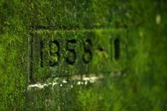 廃線跡の苔むす壁面
