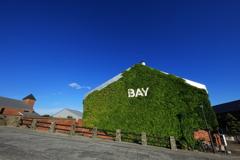 抜けるような青空と緑の蔦の絡まる金森倉庫
