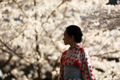 日本の春の想い出に