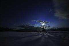 月夜のやまなしの木~月光と影