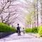 桜の径を母さんと