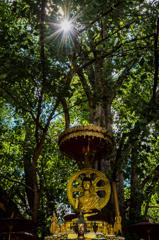 菩提樹の下で