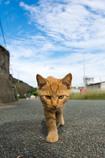 カメラが気になるネコさん