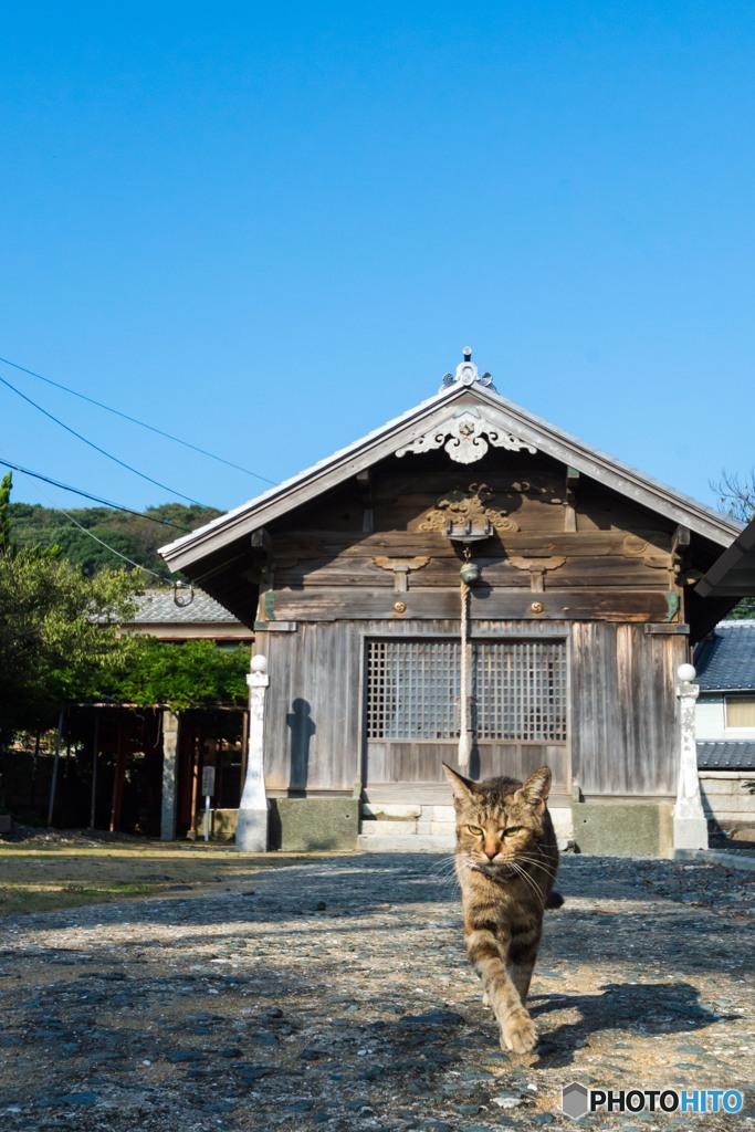 朝。神社で出会ったネコさん