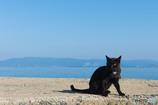 胸にハートマークのあるネコさん。有名なネコさんらしい(#^.^#)