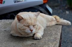 ベテランのネコさん