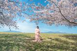 幸せは自分のなかに-青空と桜とふたり-