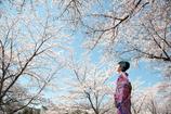 八方桜-京都鴨川-