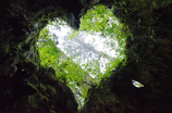 Valentine nature heart♡