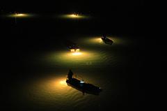 吉野川シラスウナギ漁