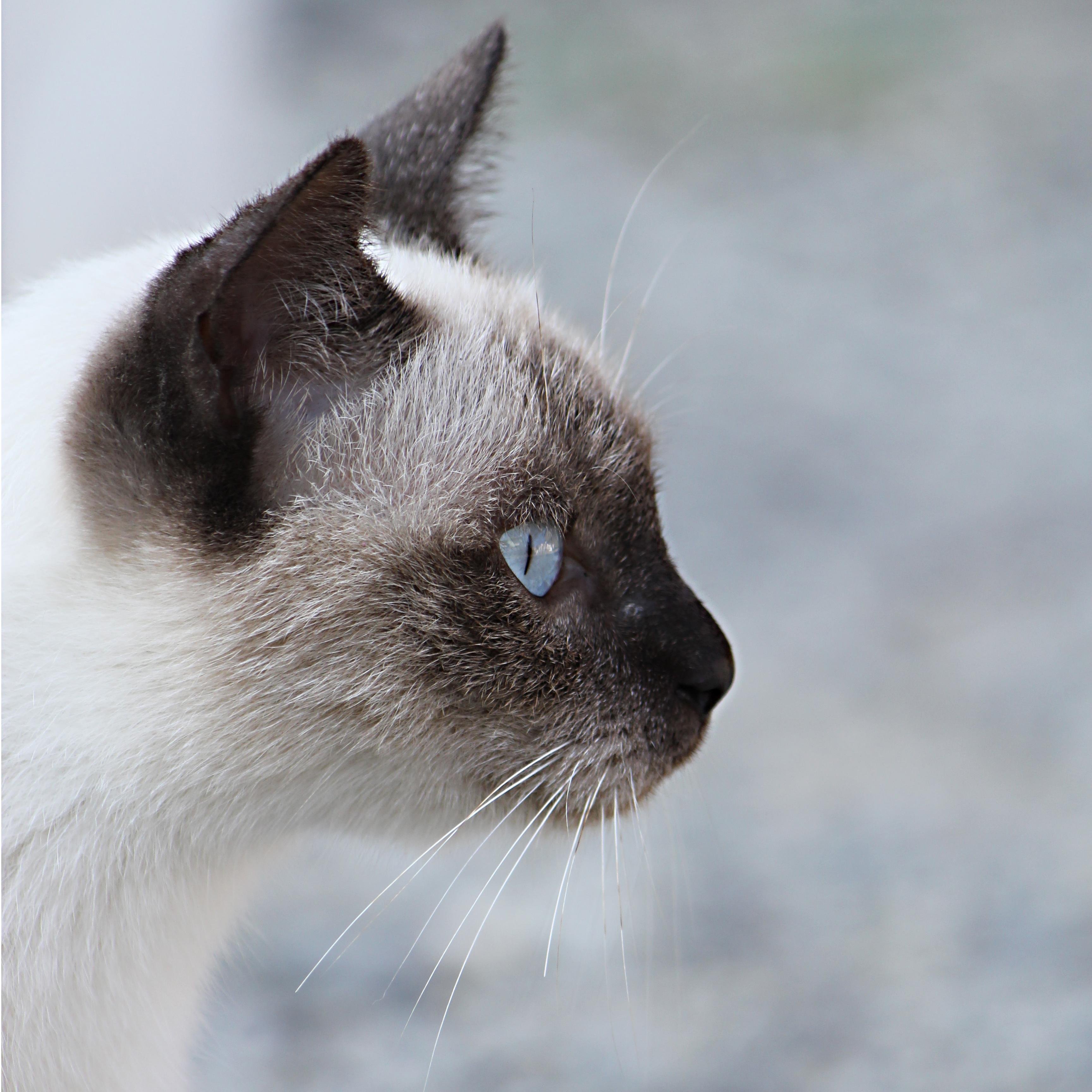 クールな猫の横顔