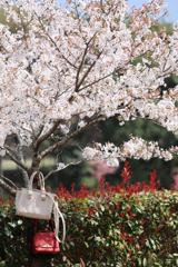 白 x 赤 = 桜色