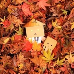 落ち葉の布団でお昼寝タイム