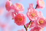 春を待ちわびて