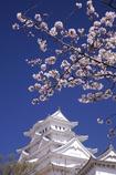 姫路城 待ちわびた春 2