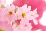 春を待つ心