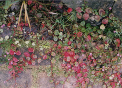Autumn color in my garden