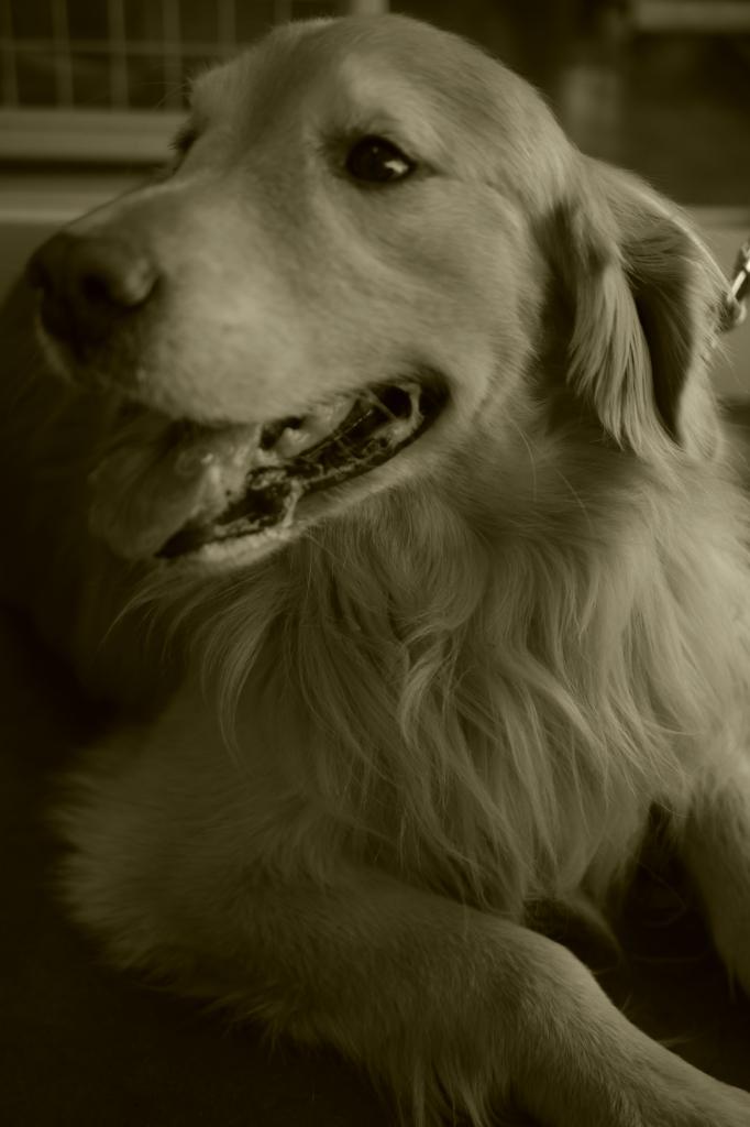 モデルのよーな犬!?