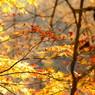 鳴子の秋、隙間より。