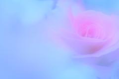 あまいバラのうた