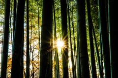 嵯峨野の竹林で。