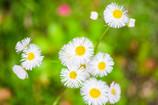 『春に見かける花』