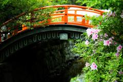 初夏の下鴨神社でのヒトコマ。 ①