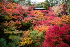 『東福寺の紅葉』