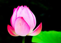 SONY NEX-5Nで撮影した(極楽浄土の花が咲く。)の写真(画像)