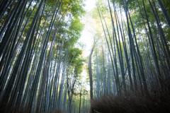 嵯峨野 竹林の道 Ⅱ