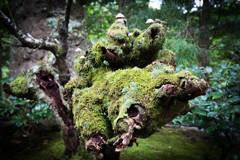苔の森に棲む。