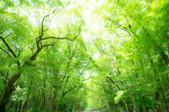 初夏の糺の森で