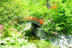 初夏の下鴨神社でのヒトコマ。 ②