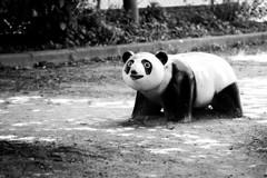 児童公園のパンダ