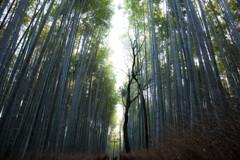 嵯峨野 竹林の道 Ⅲ