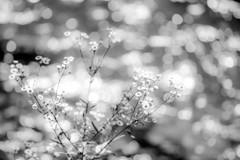 祇園白川のキラメキ Ⅱ