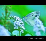 【生き物便り~蝶々の憩い~】