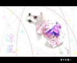 【暑中見舞い】