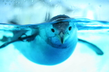 目線ペンギン
