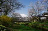 忍野の春を思い出し(2009年4月撮影)