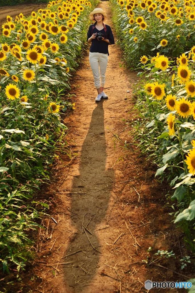 向日葵畑でたそがれて