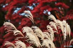 秋色を背景に2