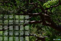 深緑の茶室