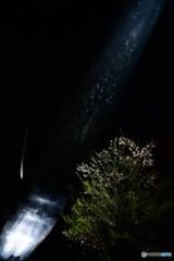 夜桜ダイブ