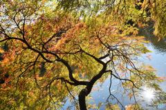 池の片隅に秋を見つけた