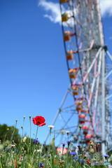 花と観覧車